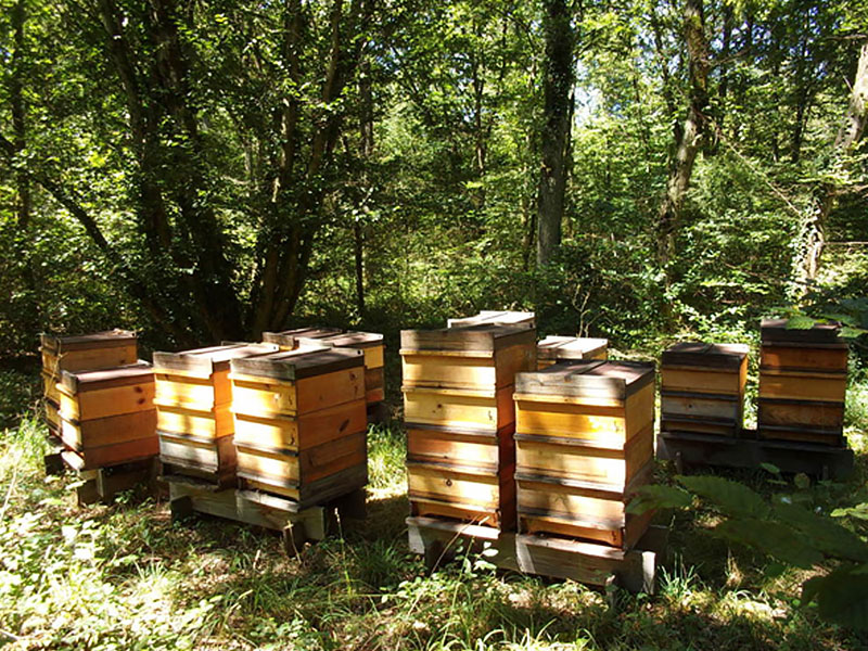 fichter-ruche