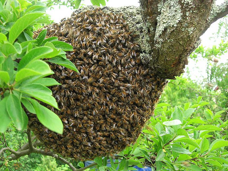 fichter-ruche2